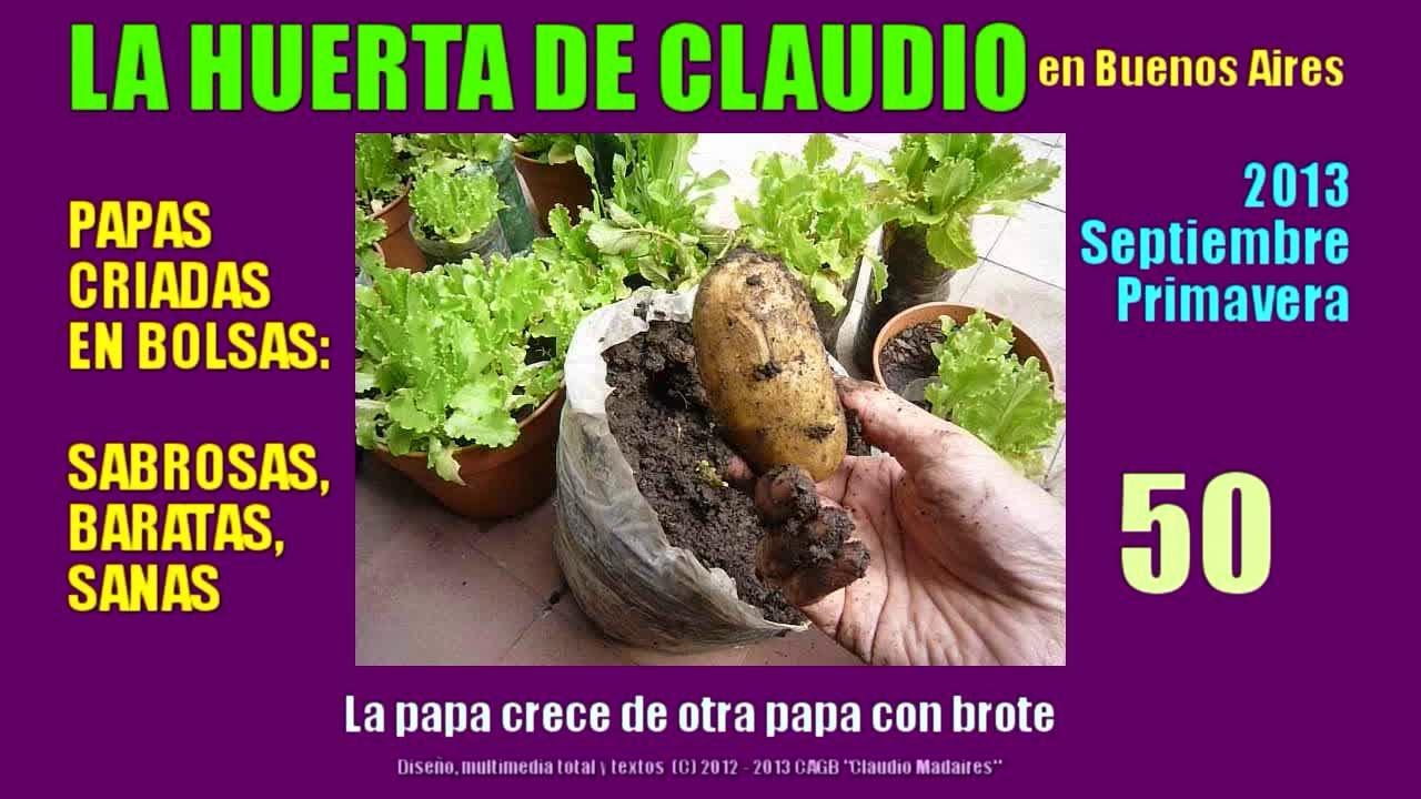 Cultivo de papas org nicas 2013 cultivo de patatas en for Como plantar patatas en casa