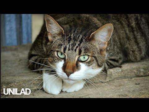 Super Clingy Cat!   UNILAD