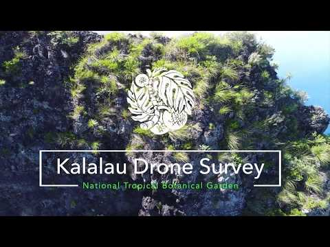 Drone reveals 'extinct' Hawaiian flower growing on remote cliff