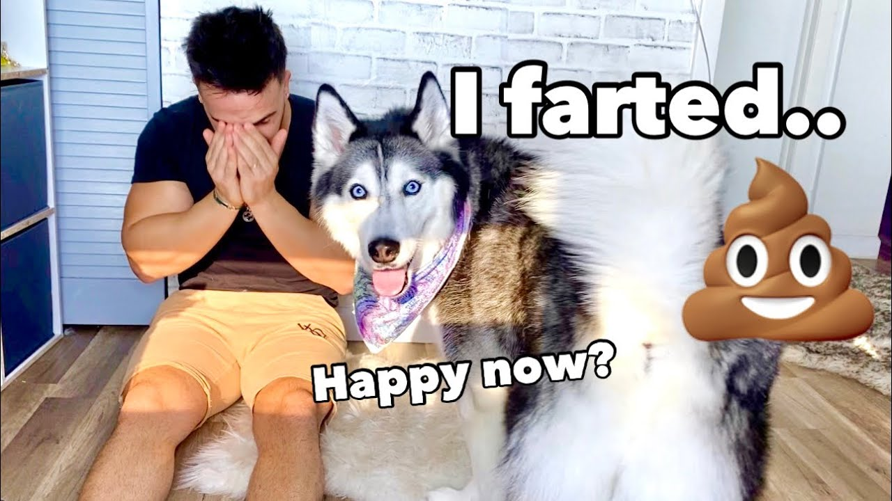 Crying In Front Of My Husky To See Her Reaction! (SO FUNNY)
