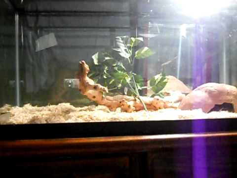 how to make a easy adult corn snake set up : corn snake lighting - www.canuckmediamonitor.org