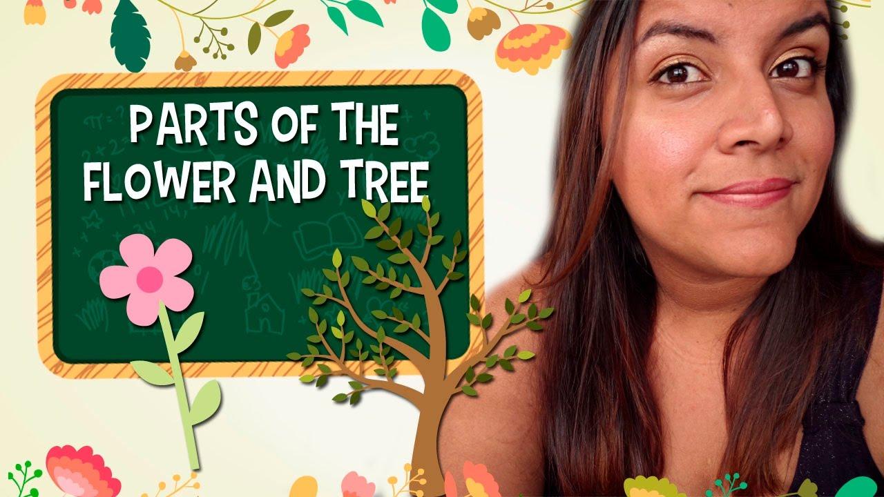 Aprende En Inglés Las Partes Del árbol Y De La Flor Youtube