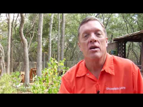 Lawn Care Tips : How to Remove Grass Fungus