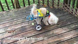 Wheelchair for Elderly Dog with Dragging/Paralyzed back legs
