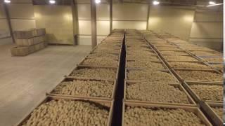 видео Картофелехранилище