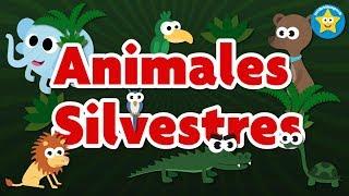 Animales Silvestres - Videos Aprende
