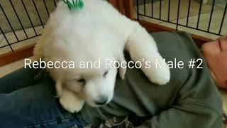 Rebecca and Rocco's Male #2