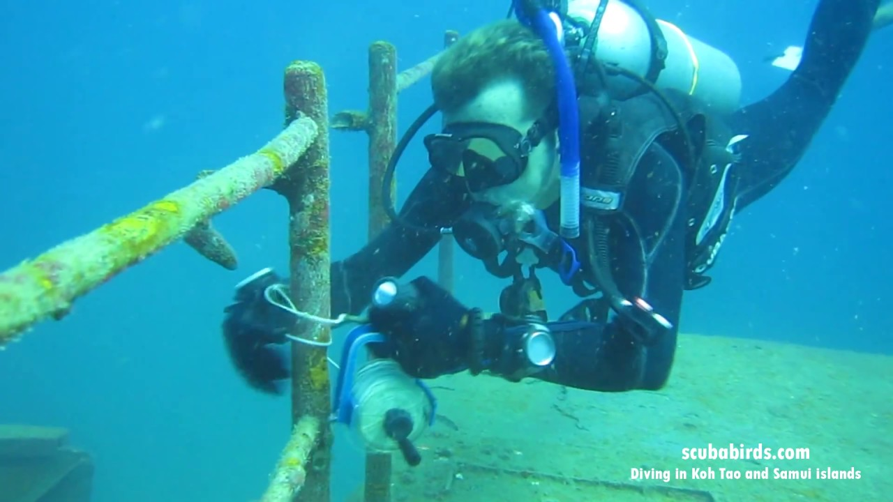 Diving in Koh Tao on shipwreck WW II HTMS Sattakut