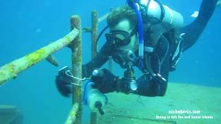 Diving in Koh Tao on shipwreck WW II HTMS Sattakut