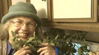 Home Grown Spearmint Tea