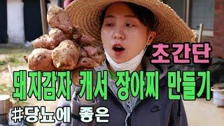 돼지감자 캐서 장아찌 만들기(당뇨에 좋은음식)
