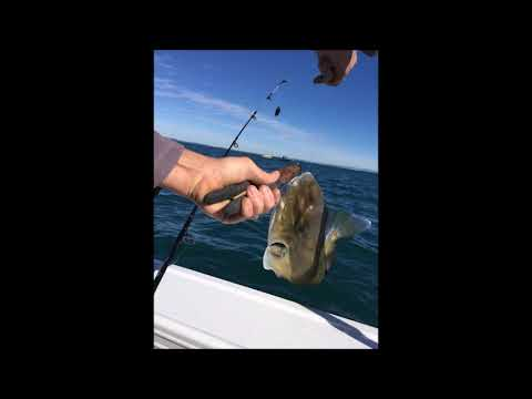 Moreton Bay Queensland Fishing and Boating
