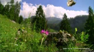 Der Tag ... Du bist erwacht - Schiller(feat. Jette Von Roth) TV Version