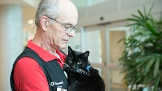 Junior the therapy cat is a purr-fect visitor for Salem Hospital patients