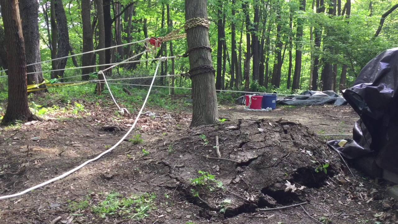 Uprooting A Tree Using A 45 To 1 Pulley System Youtube