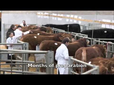 Perth Bull Sales