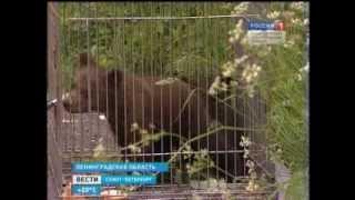'Летняя смена' в центре реабилитации животных 'ВЕЛЕС'