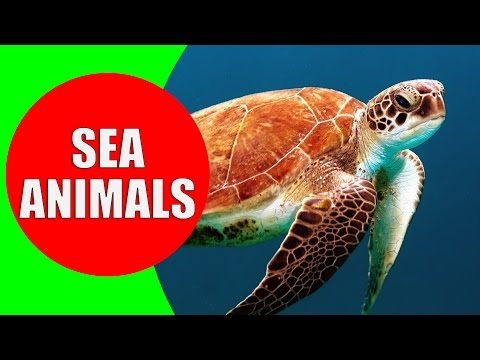 Image of: Wild Animals This Learning Video Will Teach Your Children The Sea Animals In The Ocean Your Kids Can Learn Sea Creatures And Sea Animals With Real Life Videos Лучшие приколы Самое прикольное смешное видео Sea Animals For Children Learn Sea Creatures And Sea Animals With