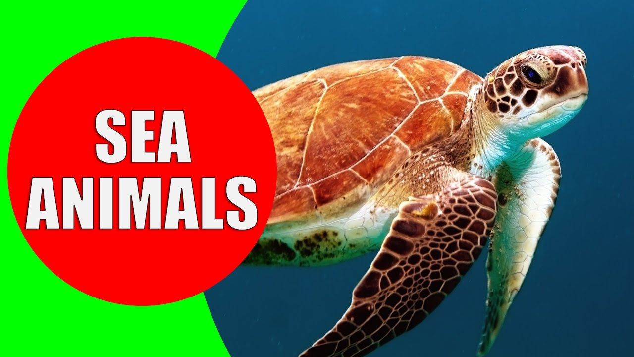 Sea Animals for Children – Learn Sea Creatures and Sea ...