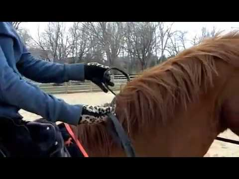 """How to get on your horse (""""mounting"""")"""