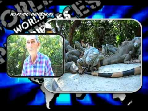 "Roatán, Honduras, Arch´s Iguana & Marine Park,""World Experiences"""