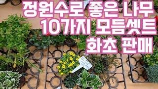 마당 정원 꾸미기 좋은 정원수 조경수 월동화초 아파트 …