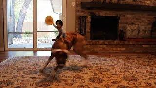 Dog cowboy Costume Funny