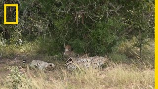 A Place for Cheetahs | National Geographic