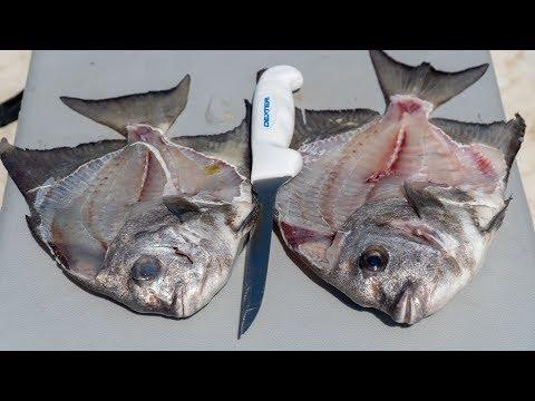 How To Fillet  Atlantic Spadefish!