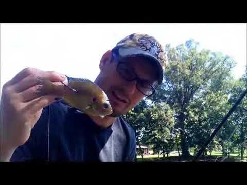 illinois catfishing