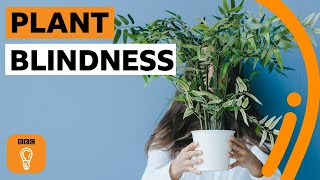 What is plant blindness (and are you suffering from it)? | BBC Ideas