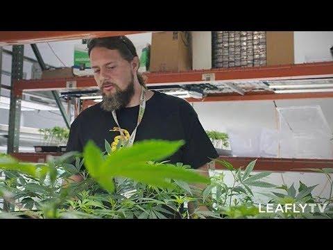 Growers Episode 8 - Black Diamond