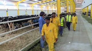 A court de lait, le Qatar importe des vaches par avion