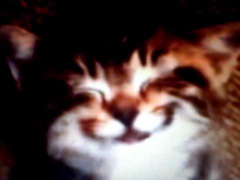 Maca peva Srecan Rodjendan . Happy Birthday   YouTube