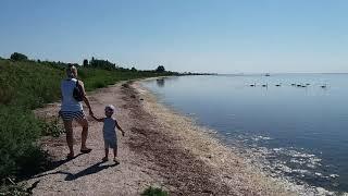 Лебеди у детского пляжа