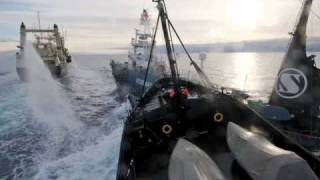 SEA SHEPHERD.wmv