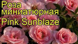 видео Купить саженцы миниатюрных роз