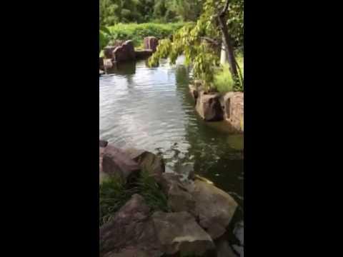 Snug Harbor Chinese Garden