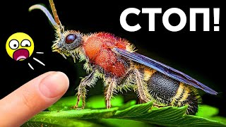 Не связывайтесь с этими насекомыми