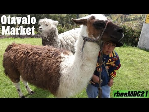Travel to South America: Otavalo Animal & Handicraft Market in Ecuador