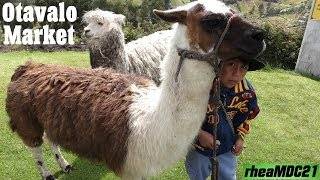 Travel to South America: Otavalo Animal & Handicraft Market in Ecuador