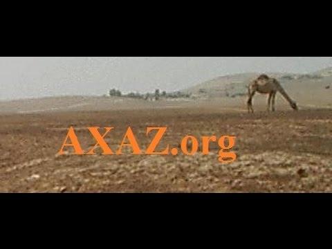21. Арабская пословица