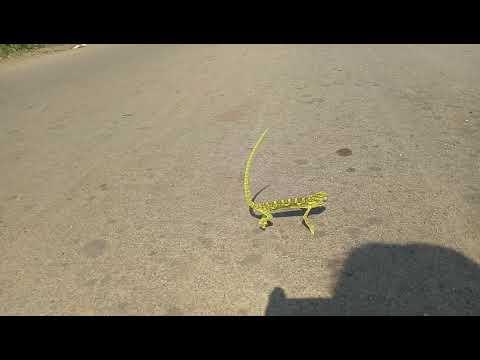 Mast dance video with aadiwasi song...