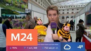 Смотреть видео В Москве проходит ярмарка меда и сыра - Москва 24 онлайн