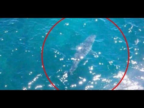 giant 7 meter shark spotted south australia youtube. Black Bedroom Furniture Sets. Home Design Ideas