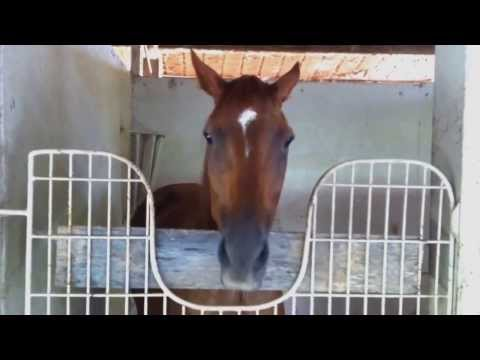 """Kirby """"THE TALKING HORSE"""" - Congratulations!"""