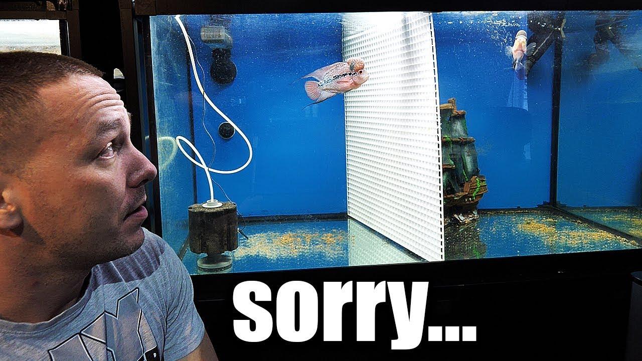 the-flowerhorn-aquarium-mistake