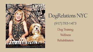 Life Enriching Dog Training Nyc - Elisabeth Weiss Of Dogrelations Nyc