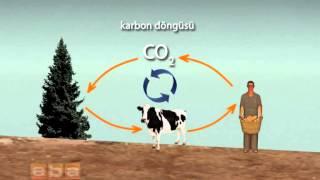 Karbon 14 Yaş Tayini