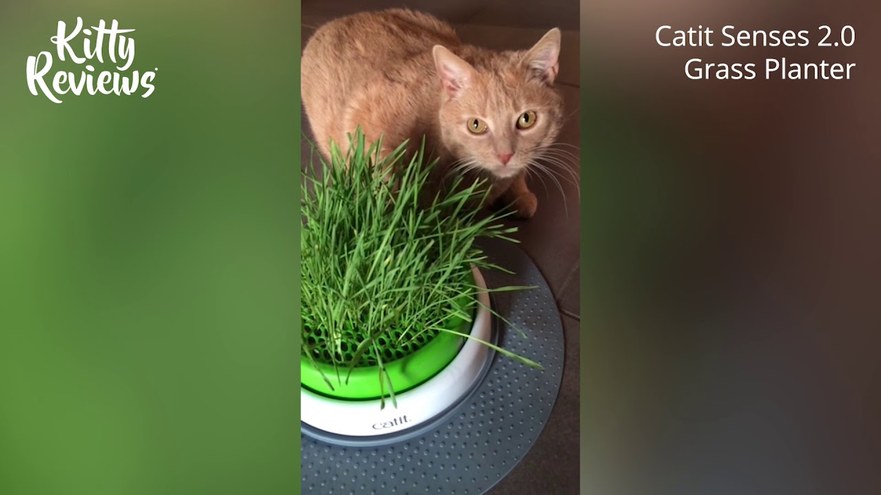 Kitty Reviews Catit Senses 2 0 Grass Planter Youtube